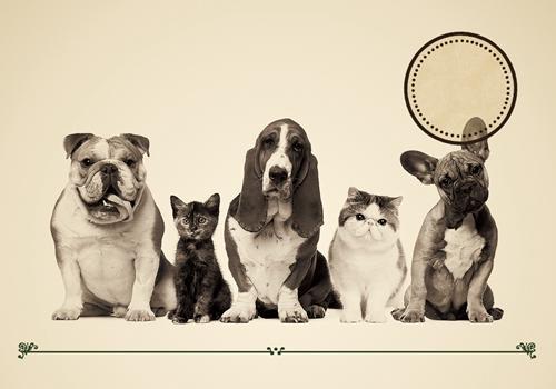 宠物医疗保险